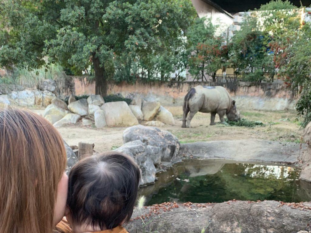 2018年に天王寺動物園に行ってサイの前で撮った写真
