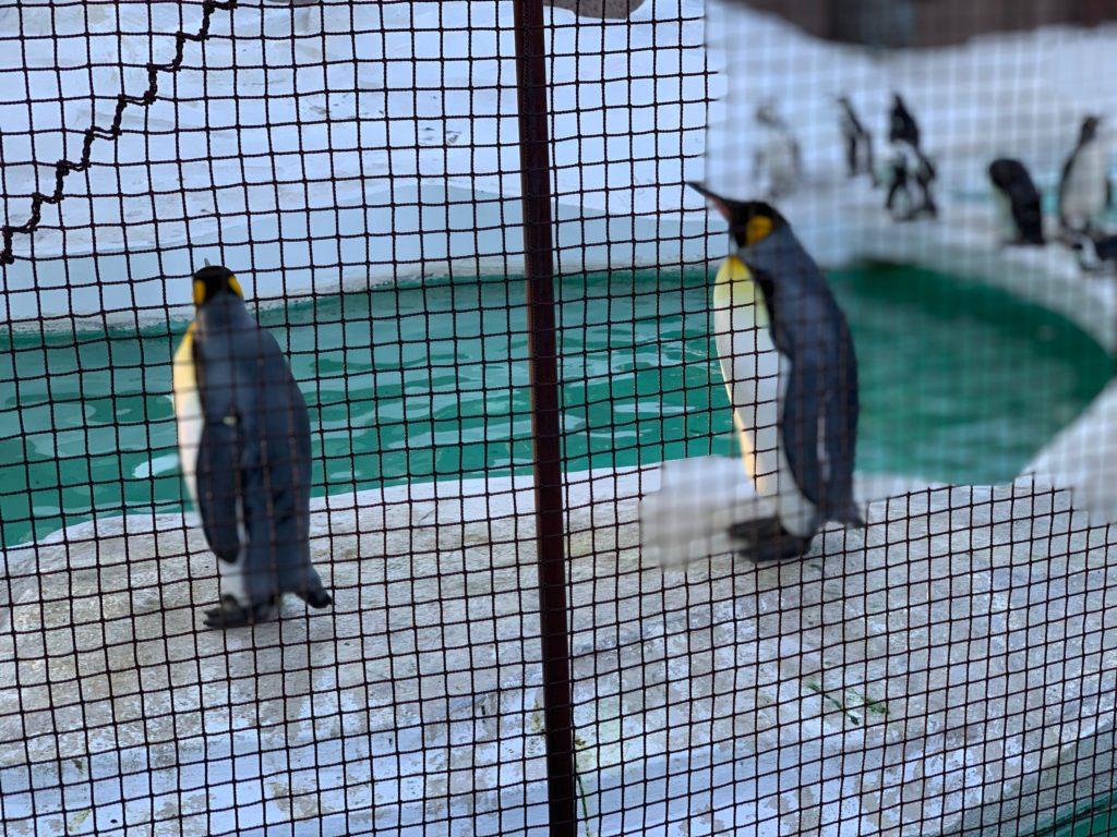 天王寺動物園のペンギン