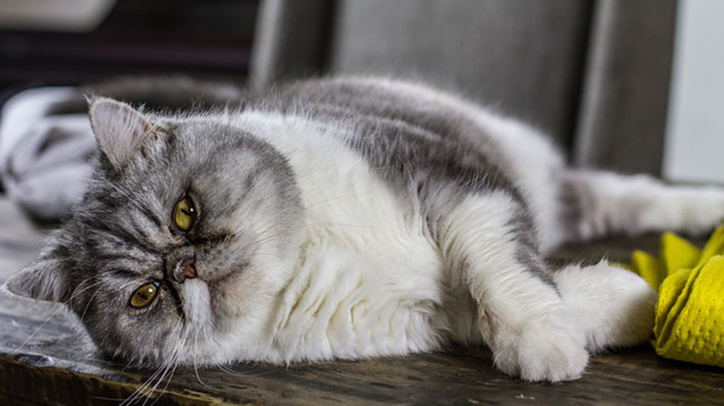 難しいそうな顔して寝転んでる猫