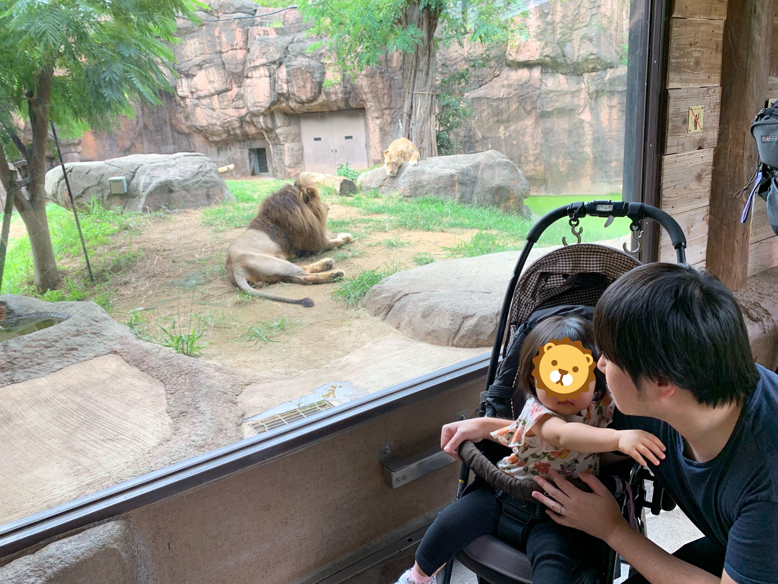 1歳4か月の娘とライオンとの写真